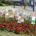 Поръчки за милиони – 2,5 млн. за цветя по време на криза